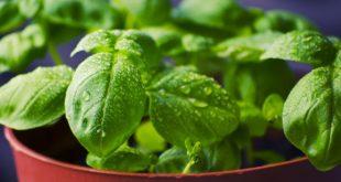 5 tipologie di piante aromatiche che non puoi non coltivare in giardino