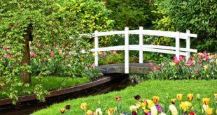 Arricchire il nostro giardino